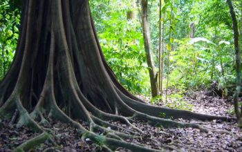 Une idée d'itinéraire de 10 jours pour découvrir le Costa Rica