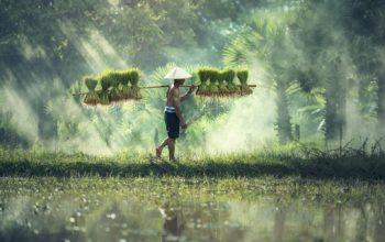 Bien préparer un séjour au Vietnam en famille : quelques conseils utiles